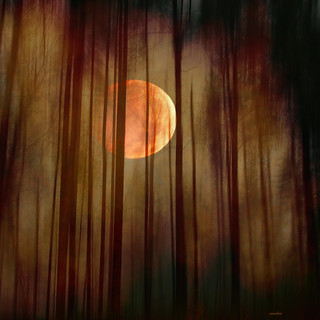 ...the moon in the forest... | by xandram