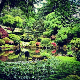 Koi pond at portland japanese garden leslie y flickr for Portland japanese garden koi