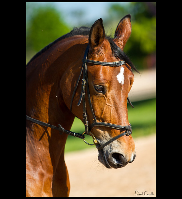 Foto de cara de caballo - Imagui