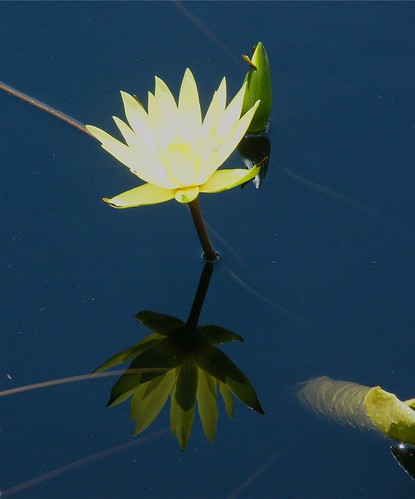 Waterlily and Reflection | by Stanley Zimny (Thank You for 24 Million views)