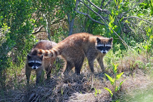 1coons dave harper oakley | by Contra Costa Times