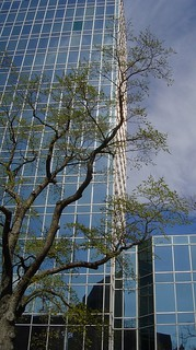 tree and building | by thomas.erskine