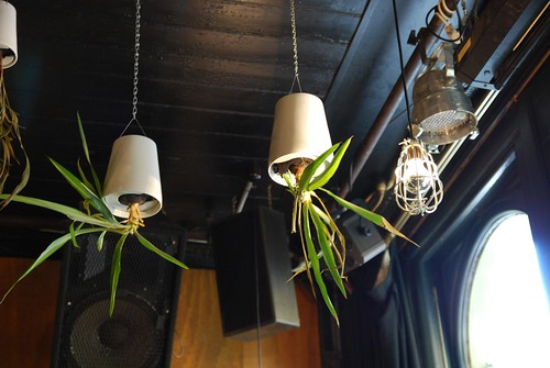 Hanging plants - close - The Lounge - test photo by Kent | by avlxyz