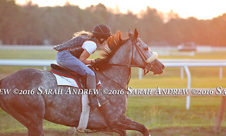 Carrumba at Saratoga | by Rock and Racehorses