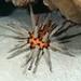 sea sputnik - night dive 4/20/12