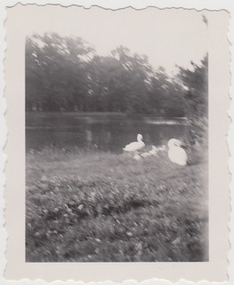 swans (1920s/30s) | by indigo_mint