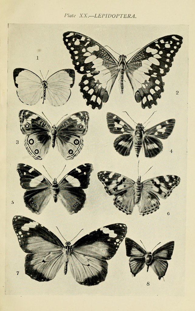 N318 W1150 Australian Insects Sydney W Brooks 1907