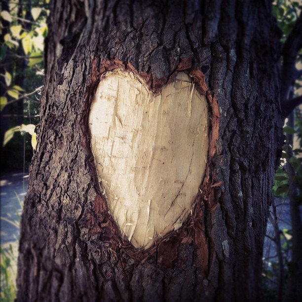 Heart love carving tree august flickr