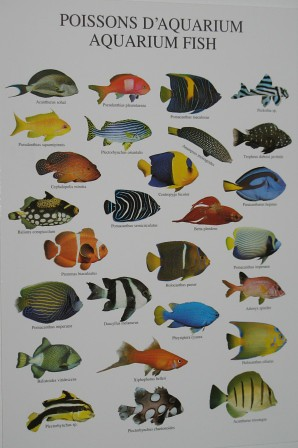 The following list of marine aquarium fish species commonly available in the aquarium trade is not a completely comprehensive list; certain rare specimens may.