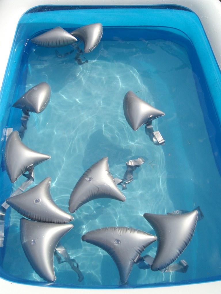 Shark Pool Party Weissbunt Flickr