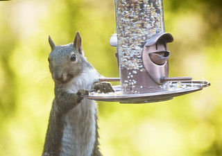 Cute Squirrel at the Bird Feeder | by Wiley Designs