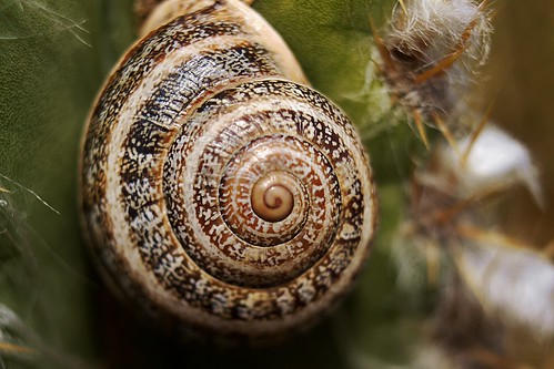 thumbnail snail | by WhatDaveSees
