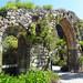 Tresco Abbey