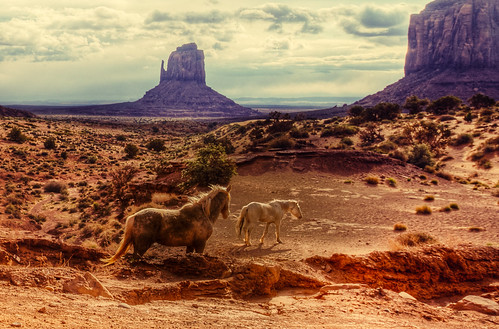 Horses in Monument Valley | by m@yphotos