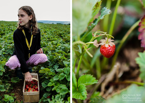 Diptych Strawberry Fields 1 | by Meeta Wolff @ What's For Lunch, Honey?
