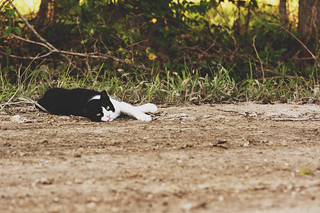 Cat Nap | by Find The Apex