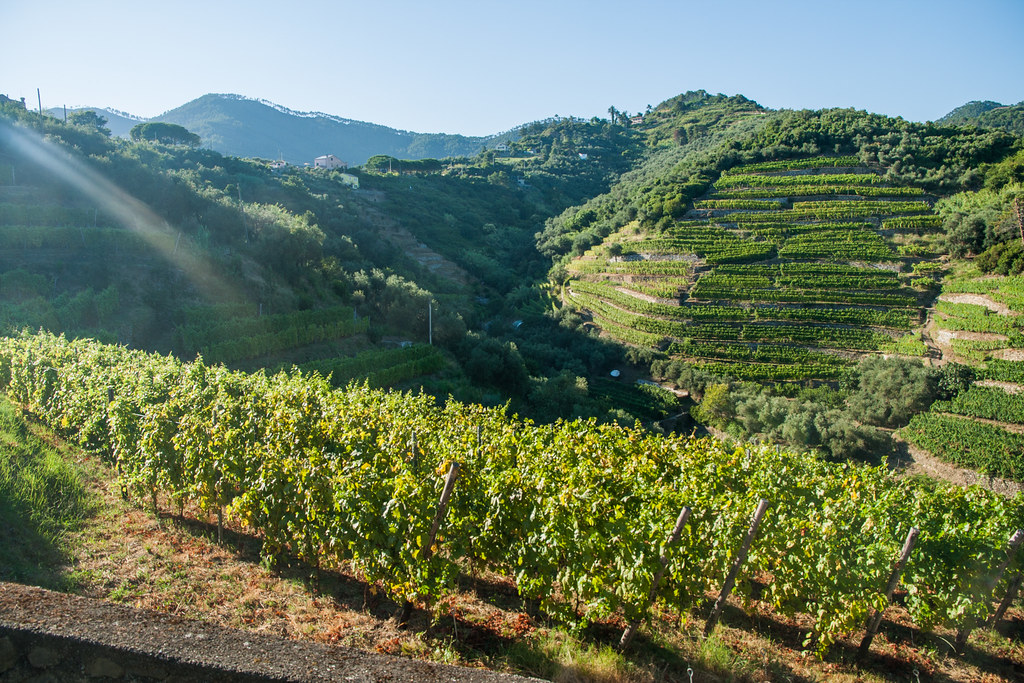 The view of the Monterosso vineyards