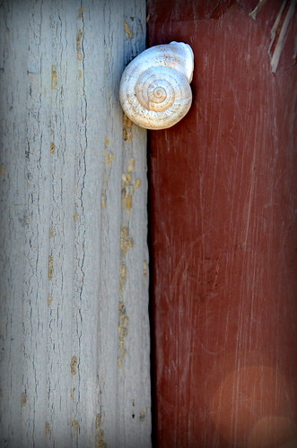 Snail on Wood | by orrblue