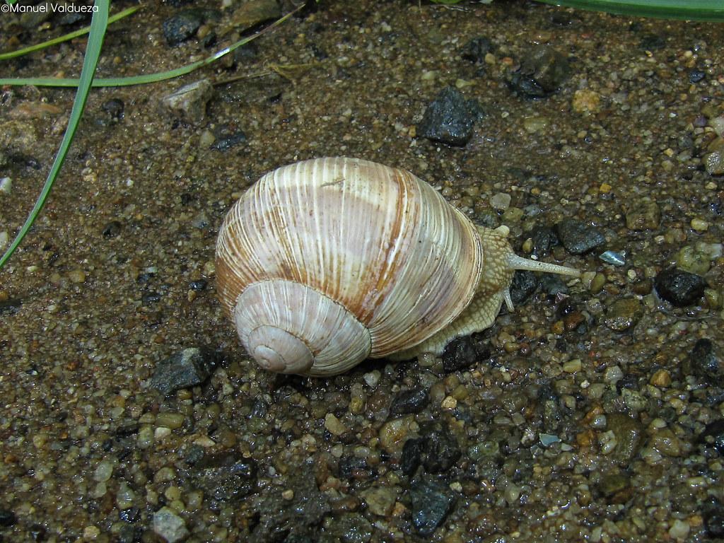 Gastropoda Blog