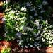 garden (9) 2012
