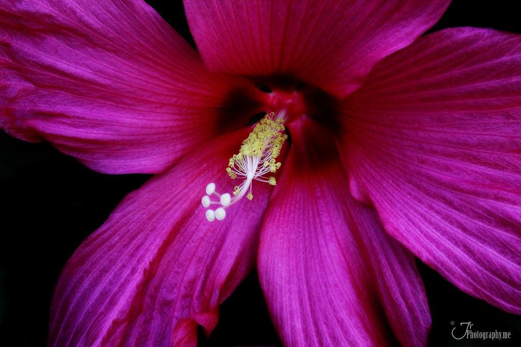 Purple Hibiscus by Chimamanda Ngozi Adichie BOOK (2003, Hardcover)