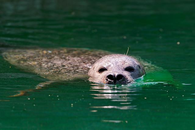 Seal at the surface