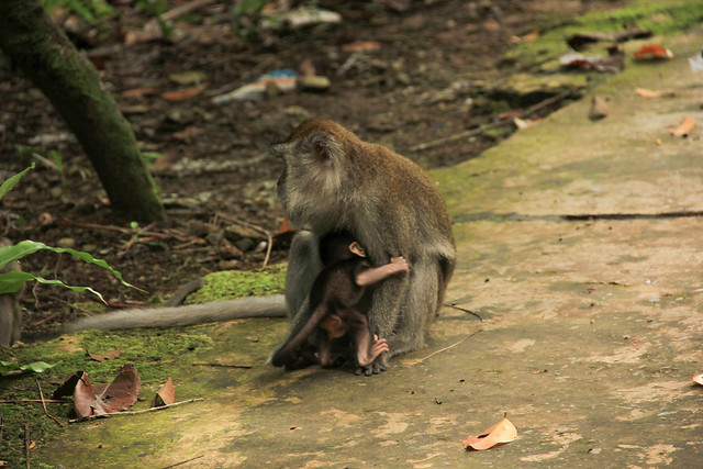 mother and infant monkey