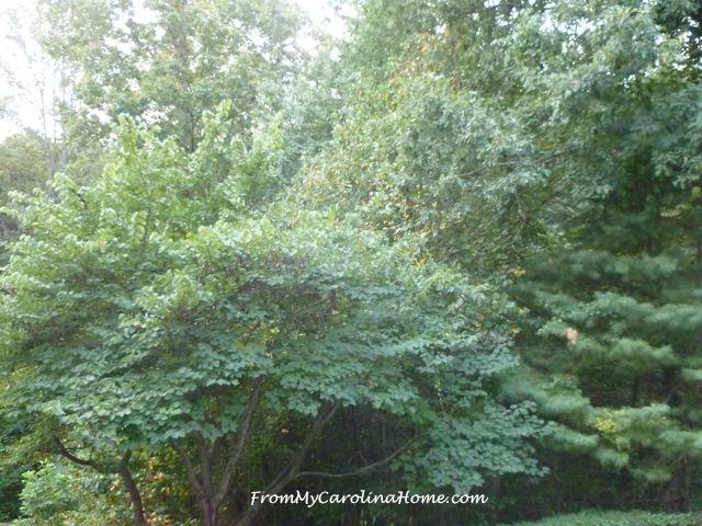 September Forest 1