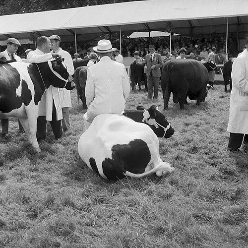 Royal Welsh Agricultural Show at Golden Grove, Carmarthenshire | by LlGC ~ NLW