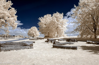 Infrared Landscape | by Liz Phillips Photography