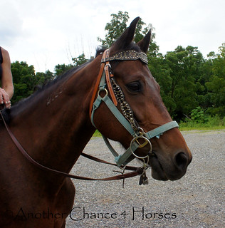 DSC08383 | by Another Chance 4 Horses, Inc.