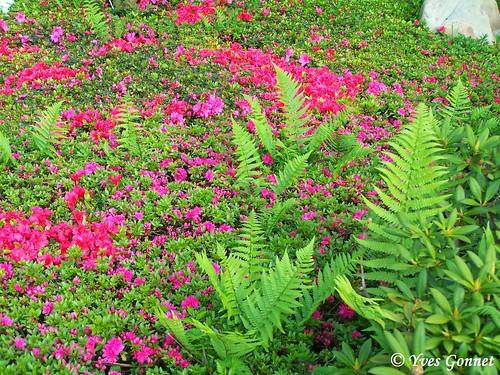 Parc albert kahn jardin japonais boulogne billancourt p flickr - Jardin d eveil boulogne billancourt ...