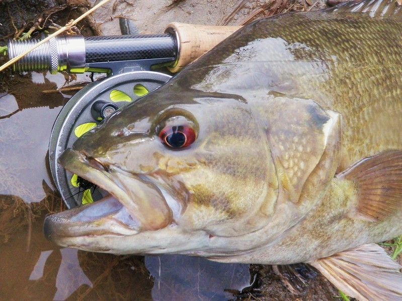 Classic pro tips how to catch springtime smallmouths for How to fly fish for bass