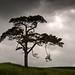 Tree nr Ansty, Wilts