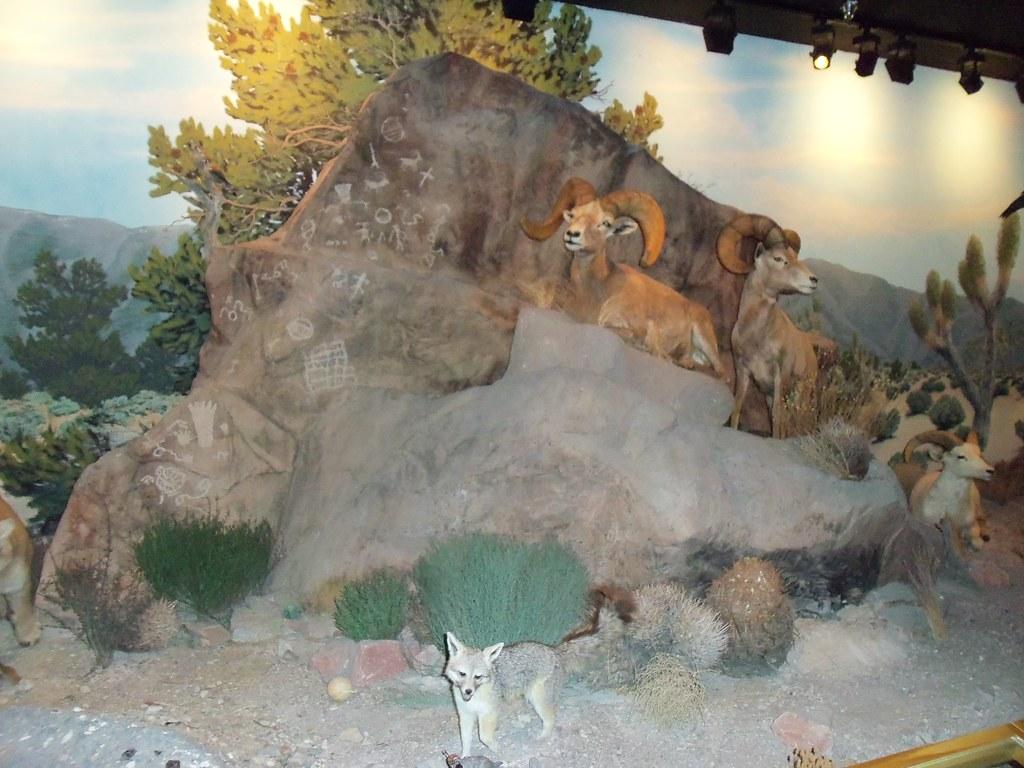 Las Vegas Natural History Museum Jobs