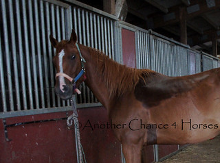 DSC04469 | by Another Chance 4 Horses, Inc.