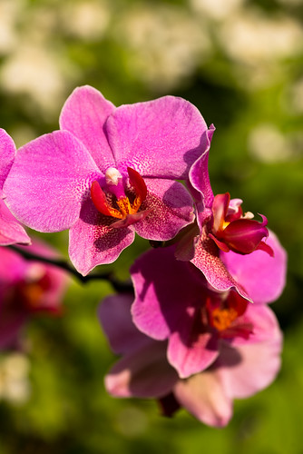 Orchid 1 | by P.A.B.