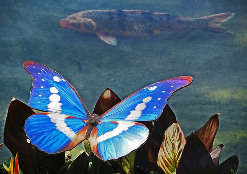 butterfly and fish...Explored | by al-ien