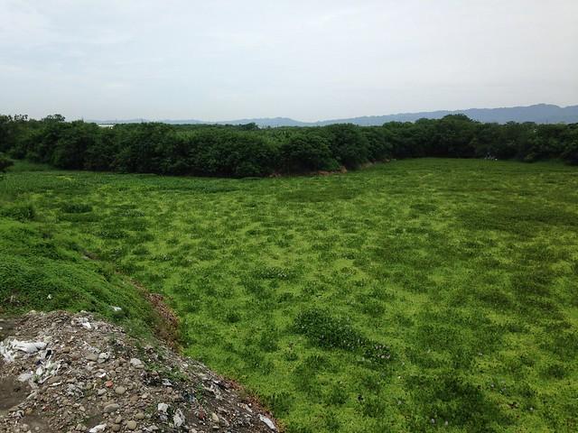 這不是草原,而是採砂後的坑洞,變成覆滿浮萍的水池。面積8公頃,居民就稱為八甲。攝影:廖靜蕙