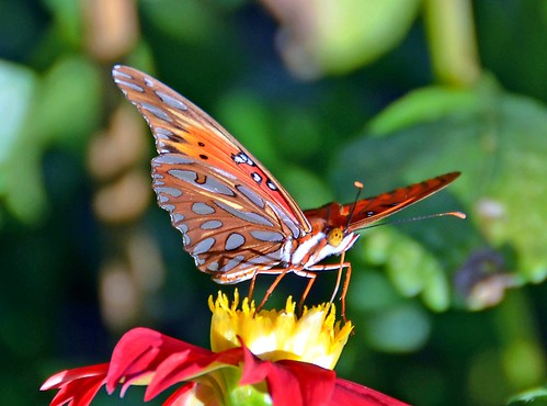 Butterfly Pose DSC | by John Dreyer