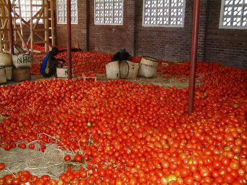 Tomatoes in Salima, Malawi / Credit: Claire Ngozo/IPS | by IPS Inter Press Service
