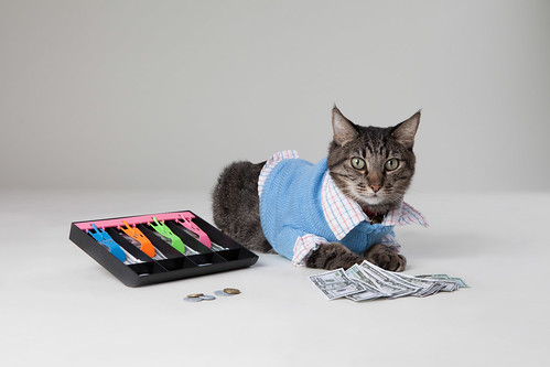 Max the Accountant Cat | by Found Animals