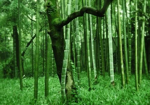 壁纸 风景 森林 植物 桌面 500_350