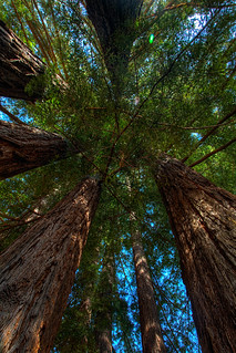 Redwood Canopy | by Floyd's Noise