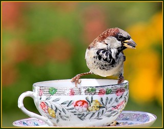 Sparrow Eating Sunflower Seeds OnYard Cup | by Happy Shuttering