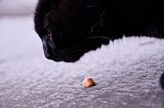 Cat on shed flickr photo sharing - What you can do with acorns a bit of health and embellishment ...