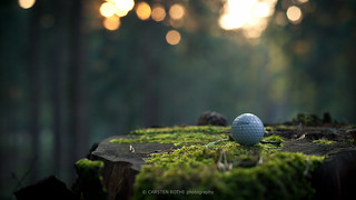 titleist hangin around in da woods @ hamburg, germany | by carsten.rothe
