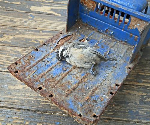 Found Dead Bird on Porch a Dead Bird on my Porch