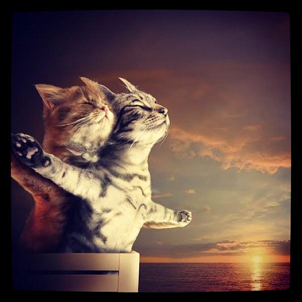 Titanic For Cats Lol Love Titanic Movie Cats Sea Flickr