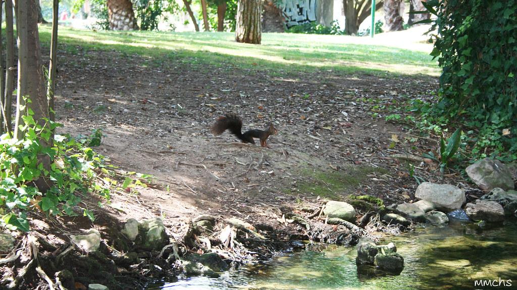 ardilla en parque la pinada L'eliana